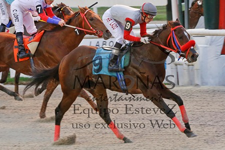 Dancing Court (Honour and Glory) se quedó con la victoria en Condicional (1000m-Arena-MAR). - Staff ElTurf.com